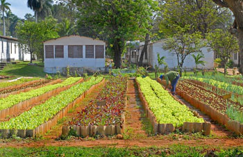 Urban farming plots are part of the Habana lifestyle